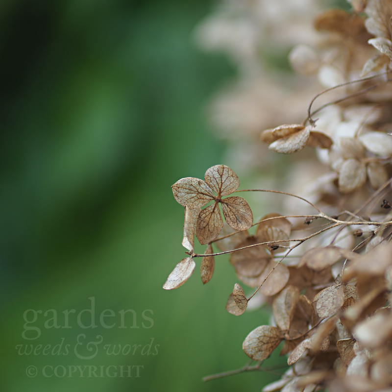 GWW-gardeninspo-day045.jpg
