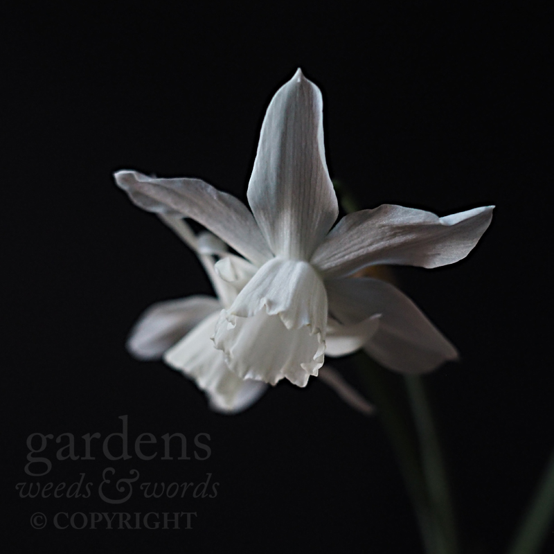 GWW-gardeninspo-day085.jpg