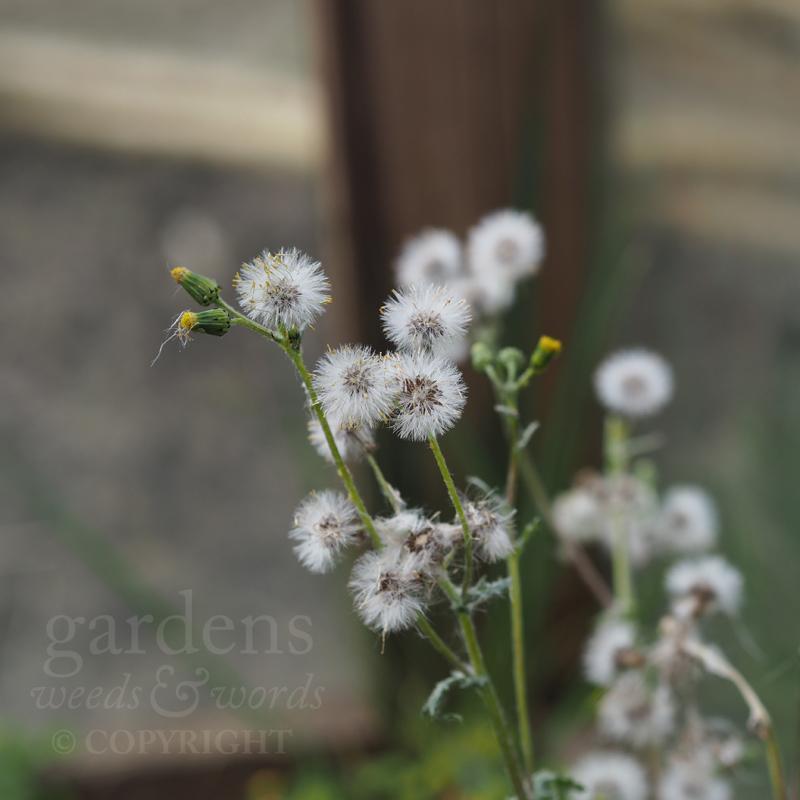 GWW-gardeninspo-day097.jpg