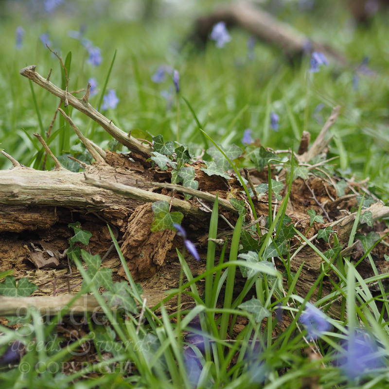 Taking inspiration for our log pile wildlife habitat from the floor of our local woodland