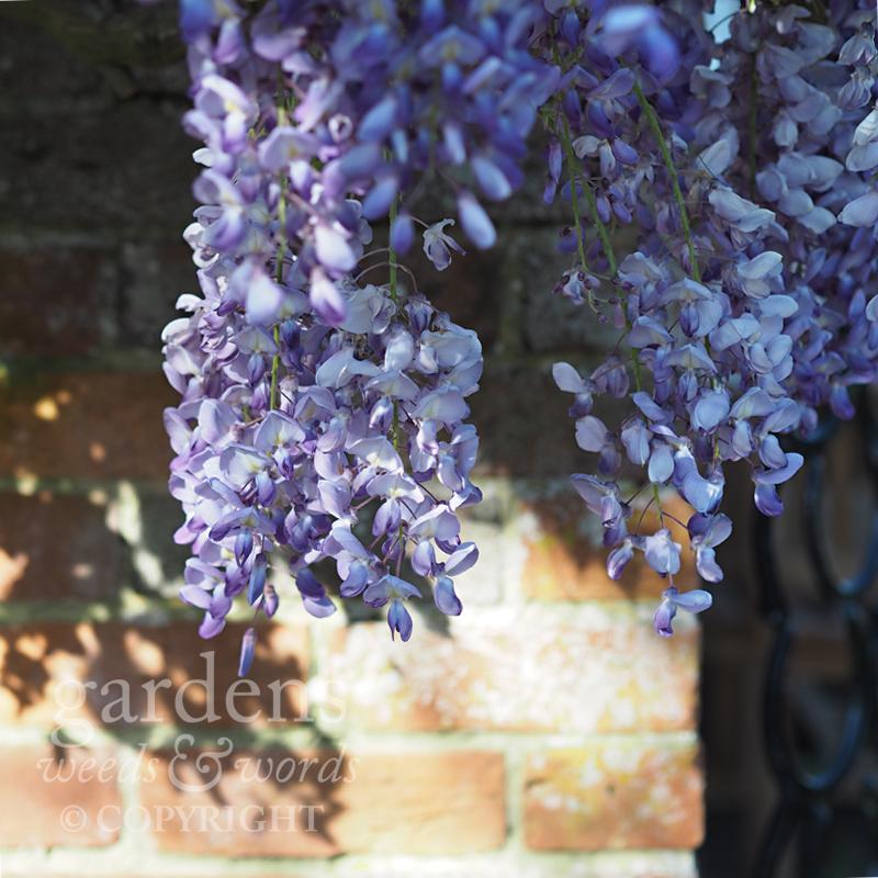 GWW-gardeninspo-day121.jpg