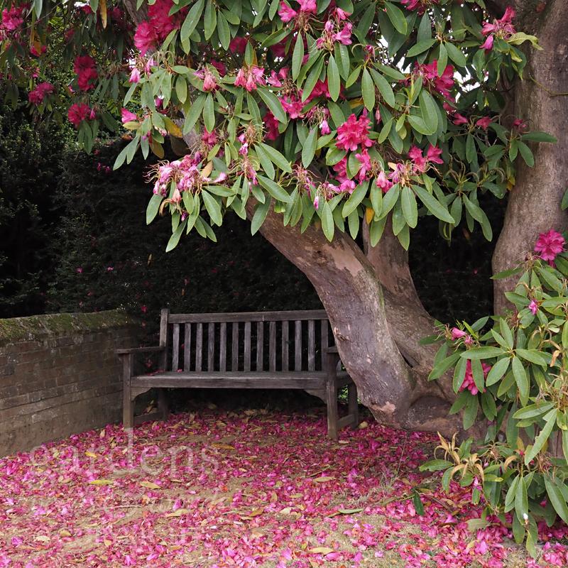 GWW-gardeninspo-day127.jpg