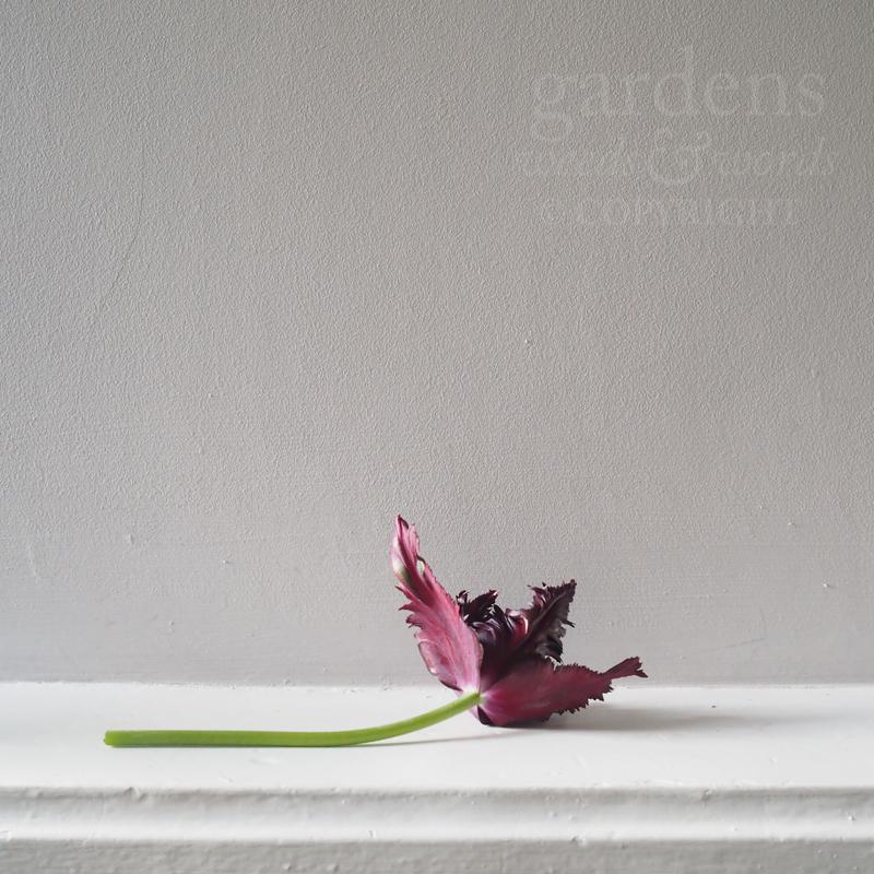GWW-gardeninspo-day130.jpg