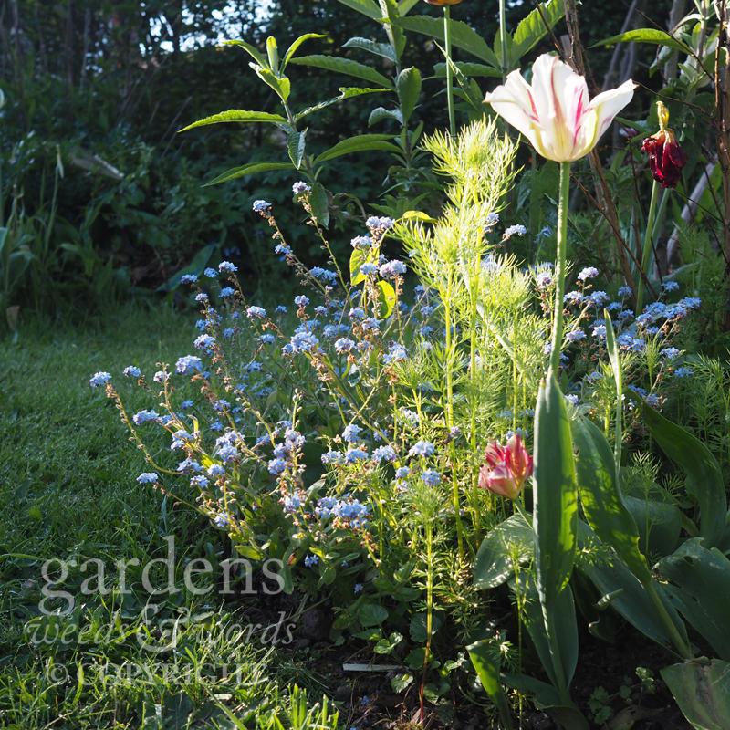 GWW-gardeninspo-day132.jpg