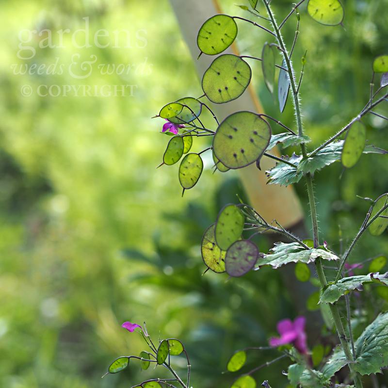 GWW-gardeninspo-day133.jpg