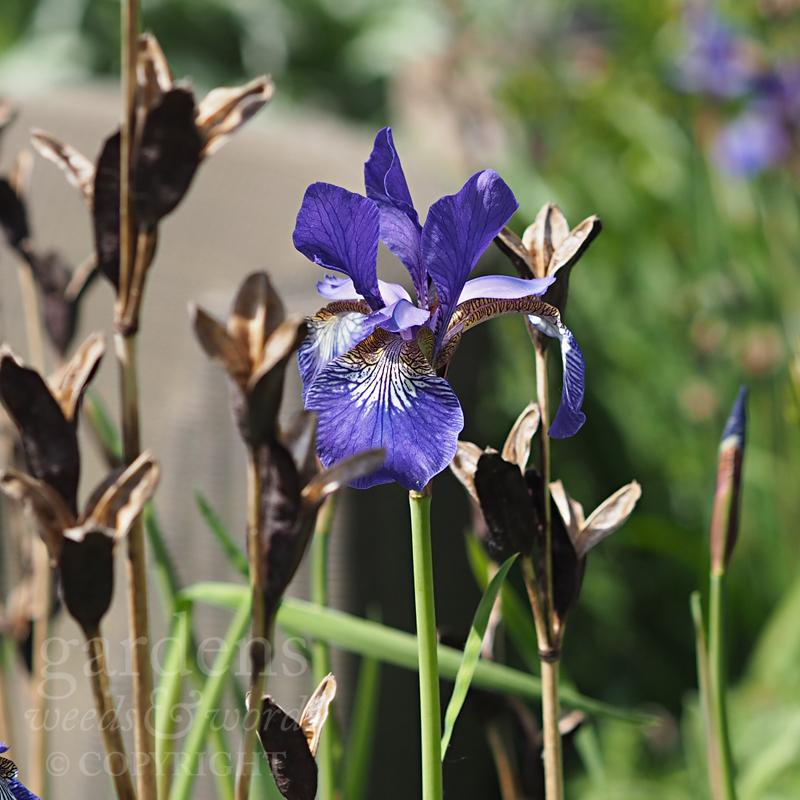 GWW-gardeninspo-day139.jpg