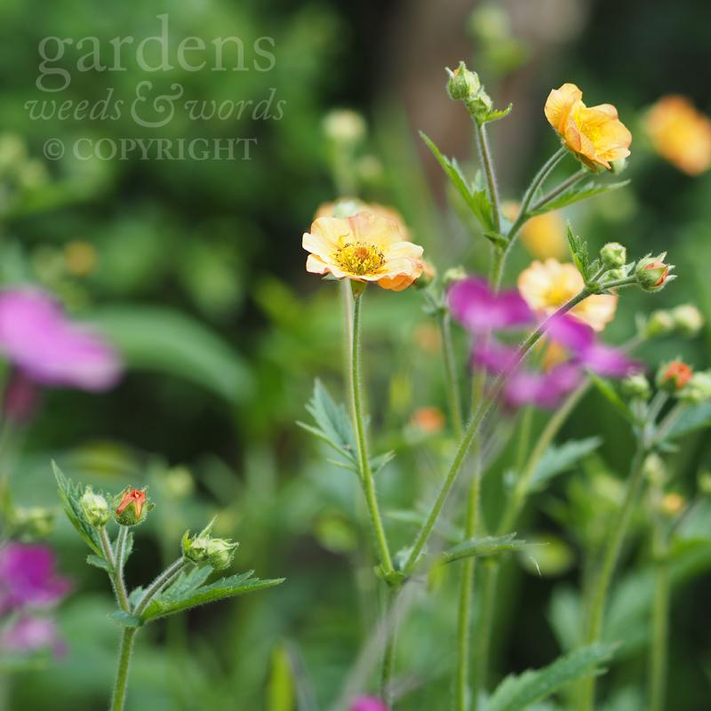 GWW-gardeninspo-day141.jpg