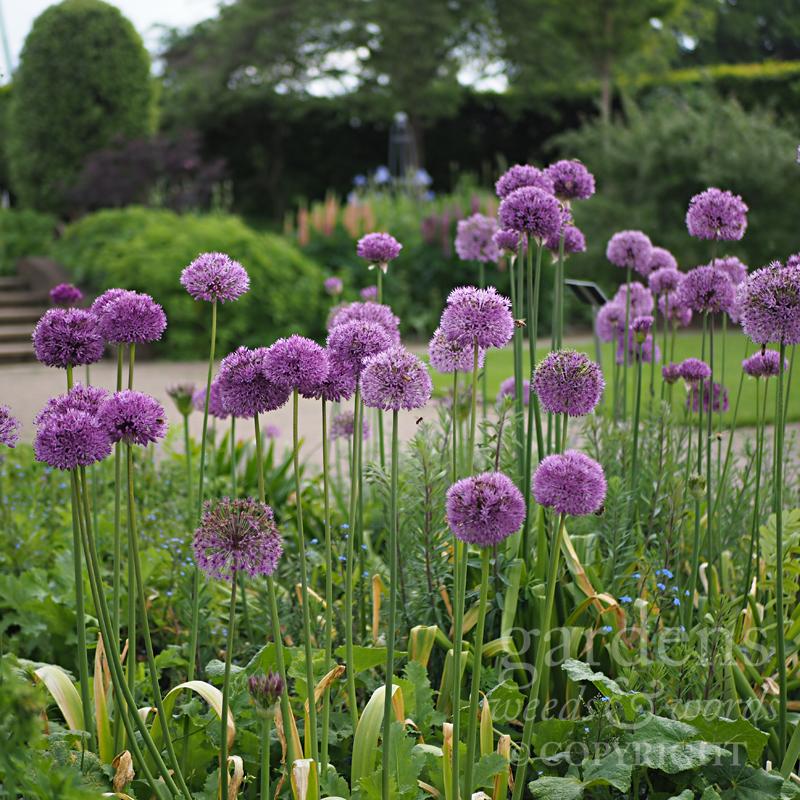 GWW-gardeninspo-day147.jpg