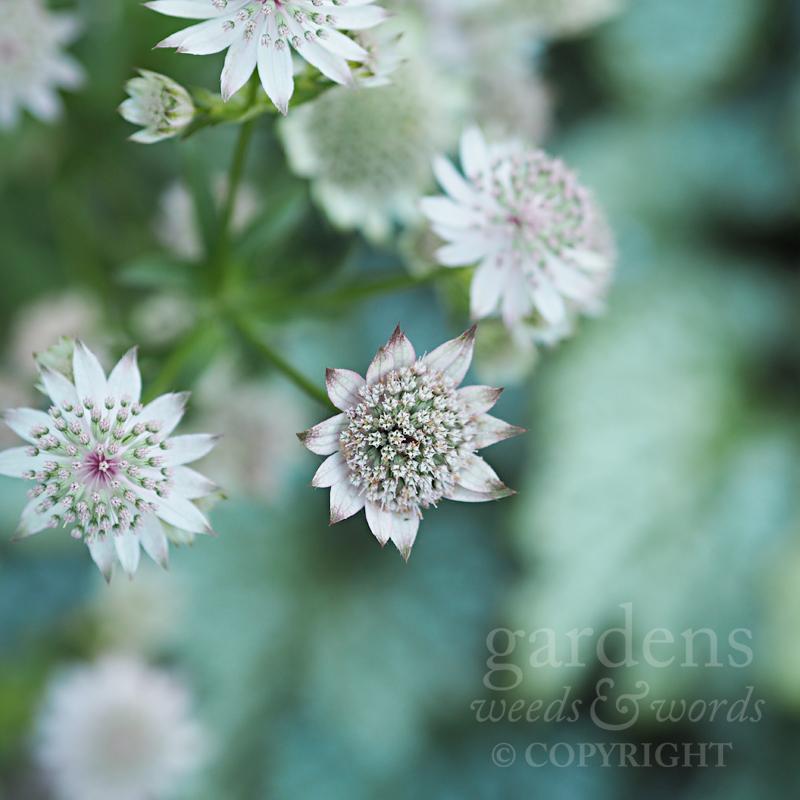 GWW-gardeninspo-day148.jpg