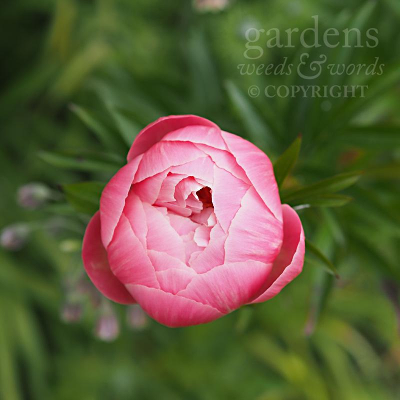 GWW-gardeninspo-day149.jpg
