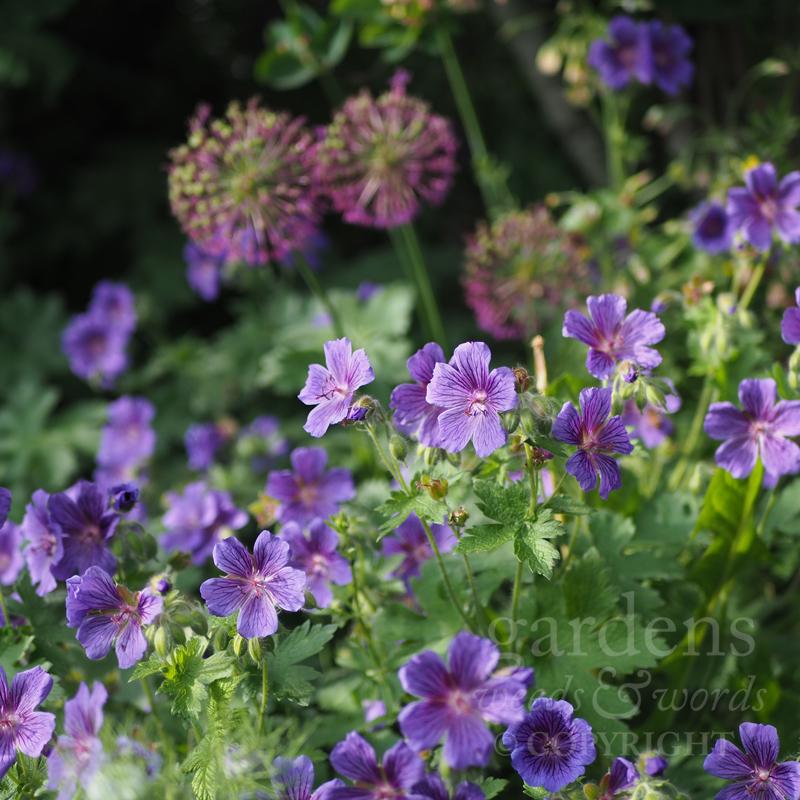 GWW-gardeninspo-day152-.jpg