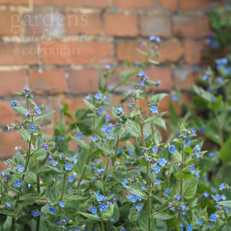 GWW-gardeninspo-day152.jpg