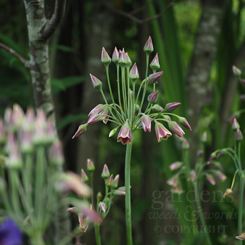 GWW-gardeninspo-day155.jpg