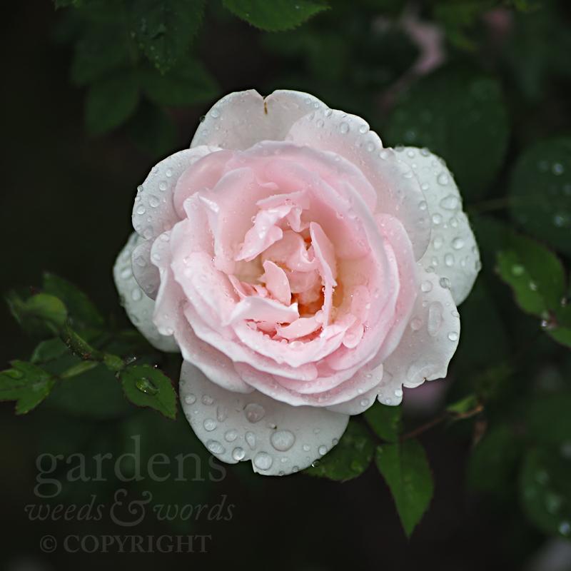 GWW-gardeninspo-day156.jpg