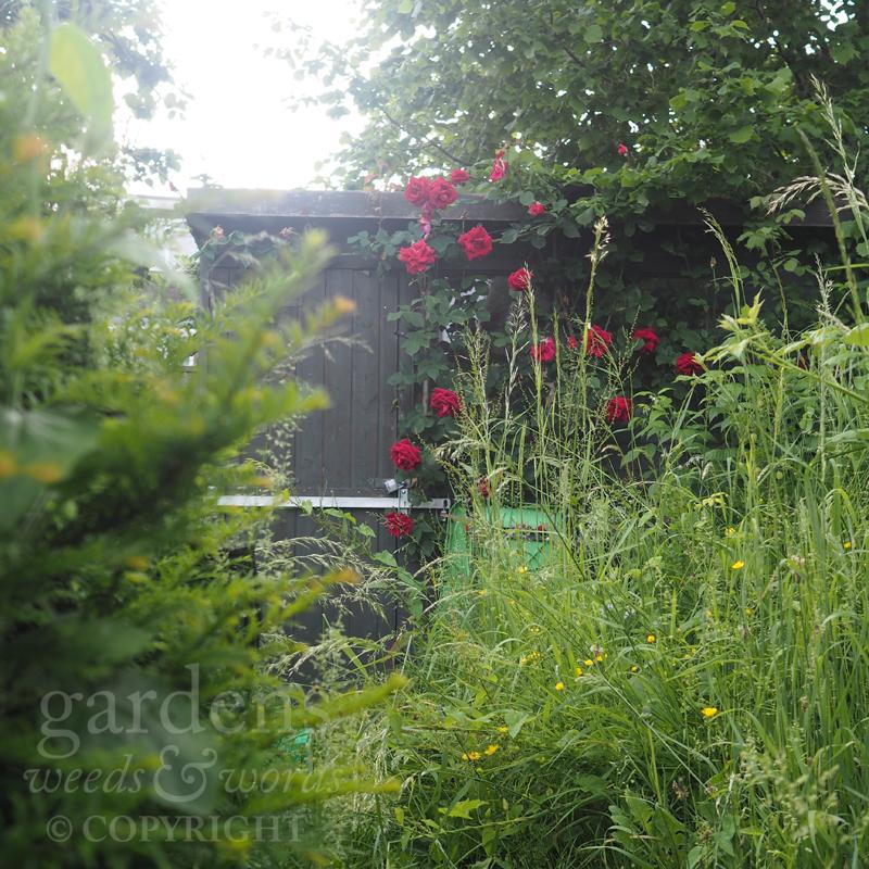 GWW-gardeninspo-day159.jpg