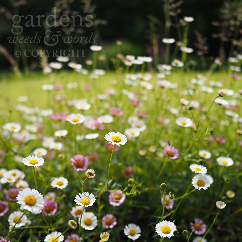GWW-gardeninspo-day170.jpg