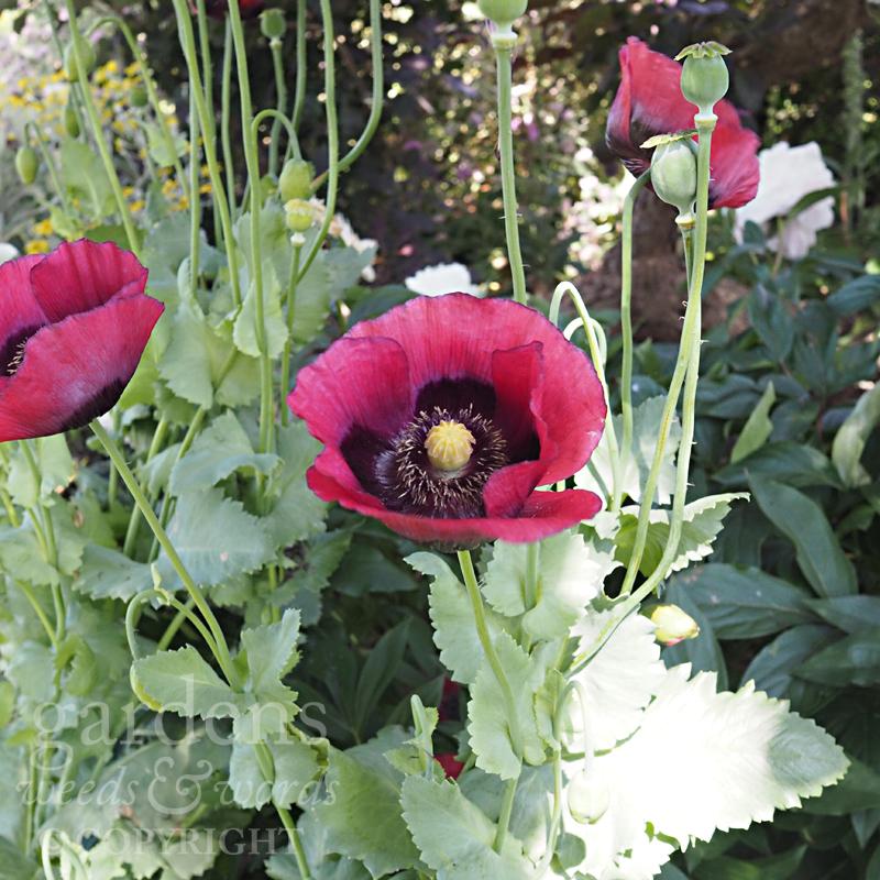 GWW-gardeninspo-day171.jpg