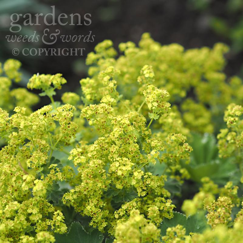 GWW-gardeninspo-day180.jpg