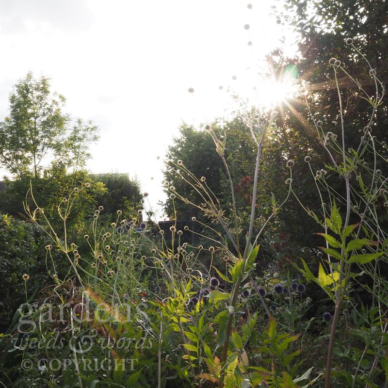 GWW-gardeninspo-day198.jpg
