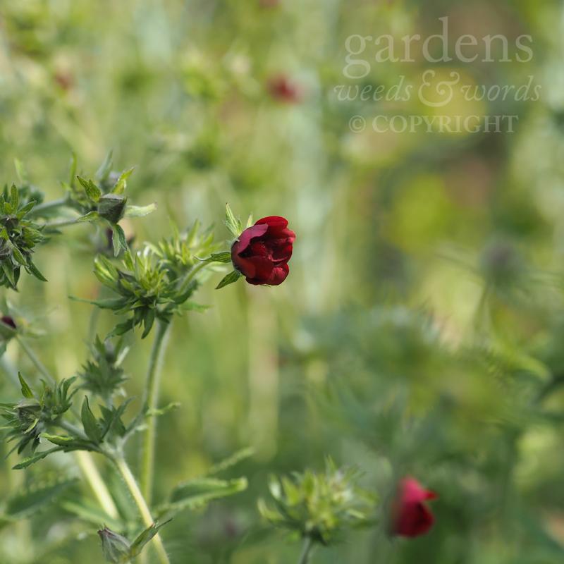 GWW-gardeninspo-day202.jpg