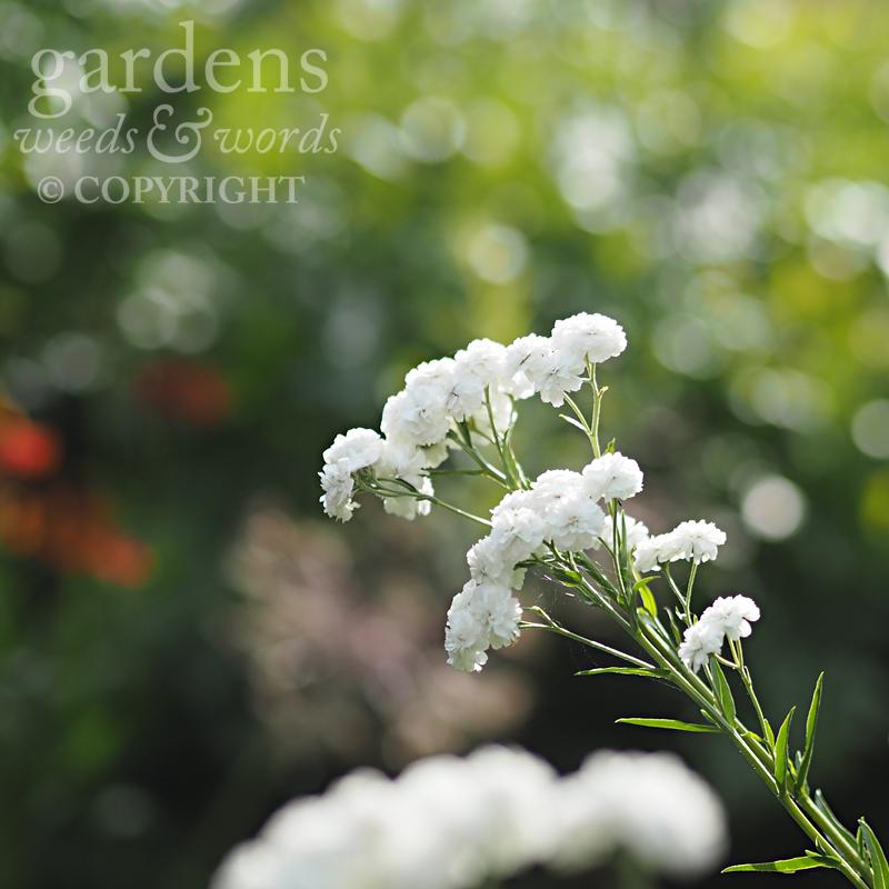 GWW-gardeninspo-day204.jpg