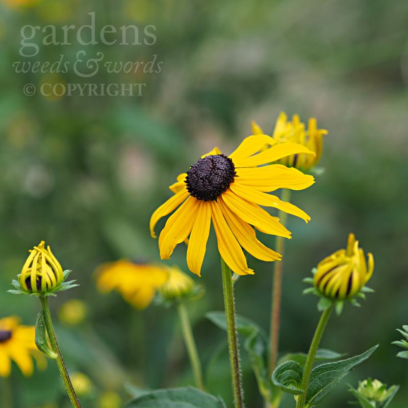 GWW-gardeninspo-day208.jpg