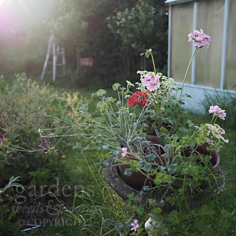 GWW-gardeninspo-day213.jpg