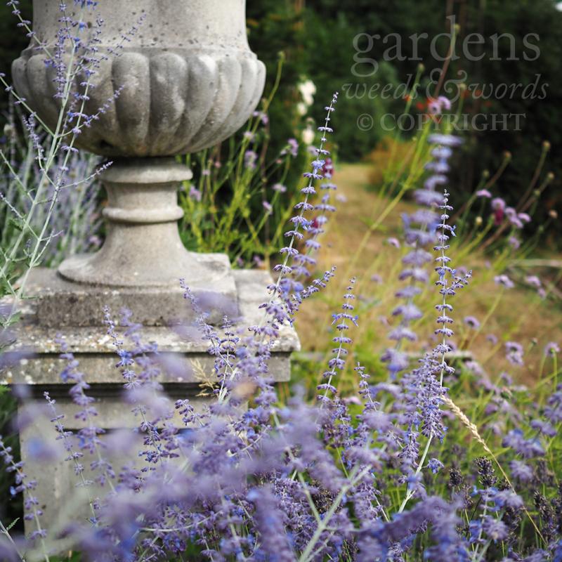 GWW-gardeninspo-day215.jpg