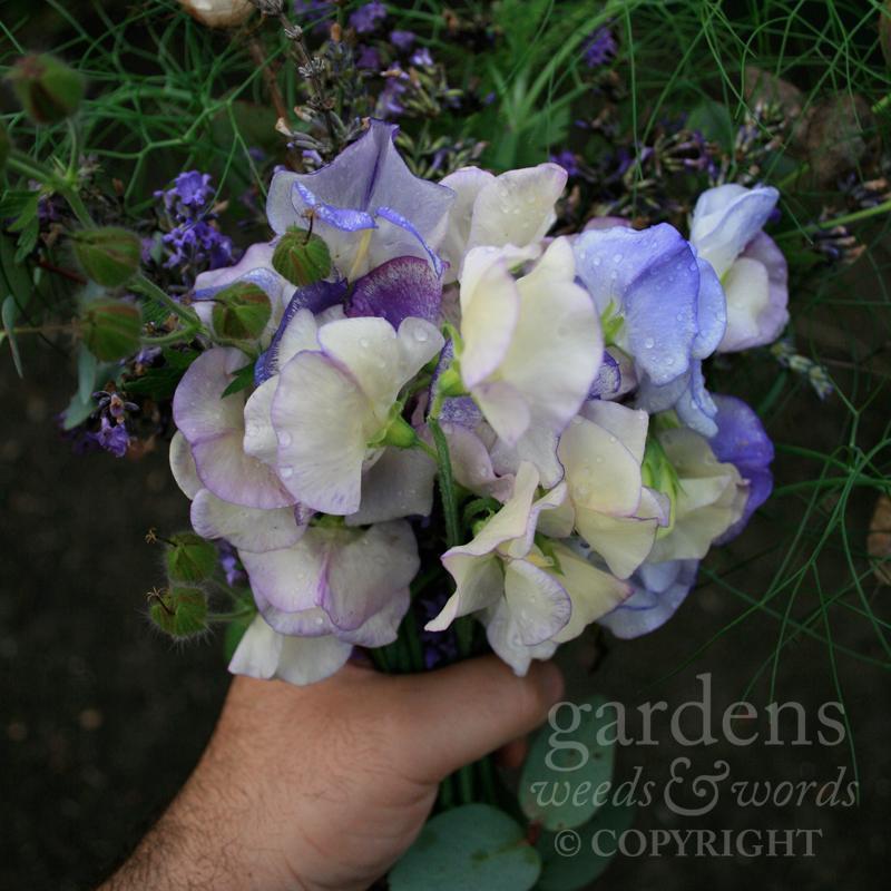 GWW-gardeninspo-day216.jpg