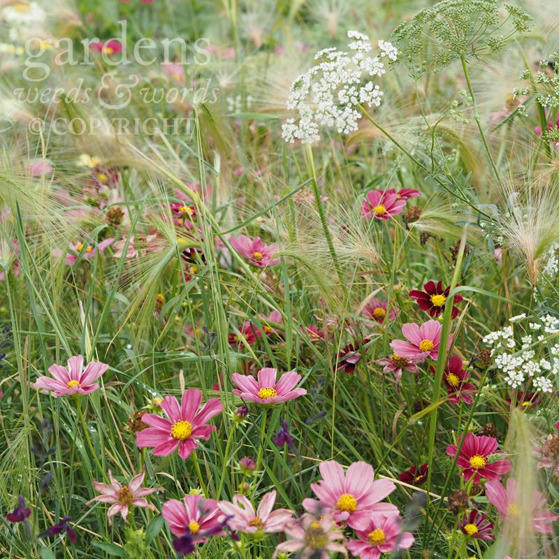 GWW-gardeninspo-day218.jpg