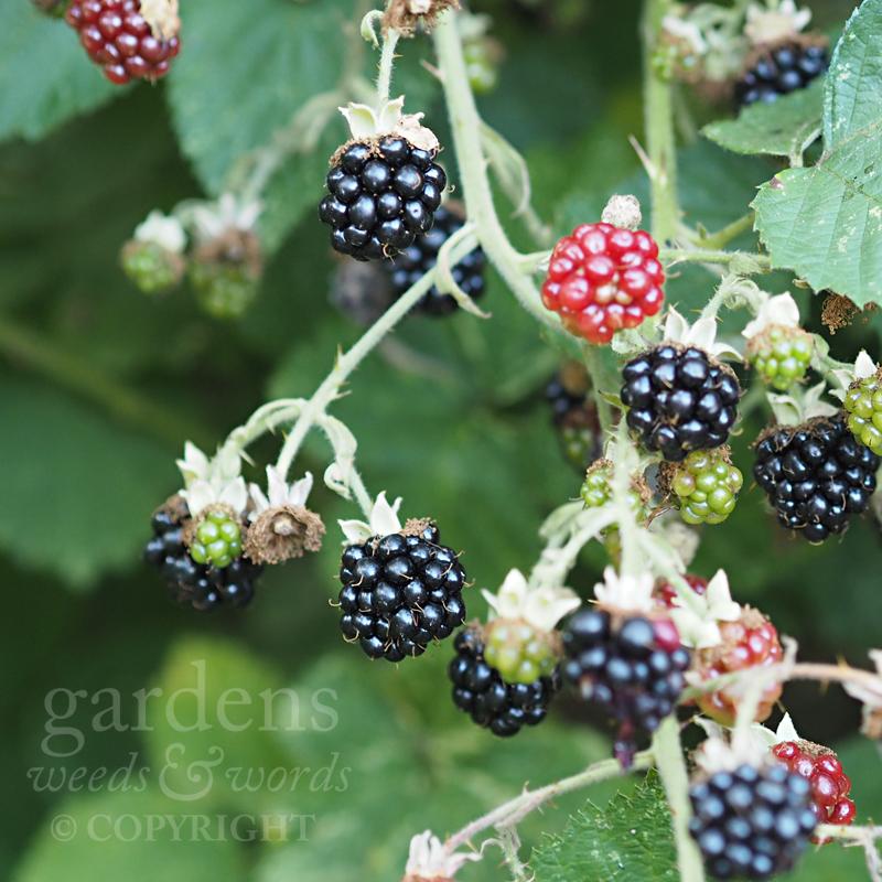 GWW-gardeninspo-day223.jpg