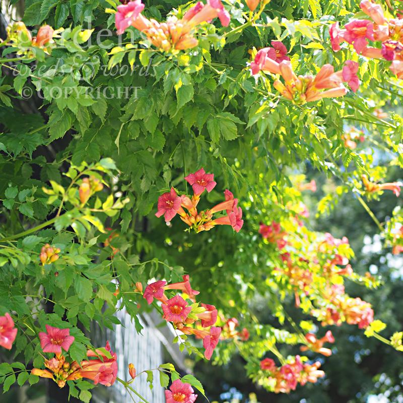 GWW-gardeninspo-day230.jpg