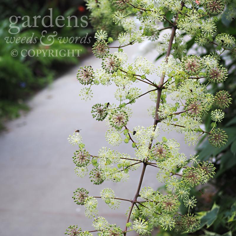 GWW-gardeninspo-day231.jpg
