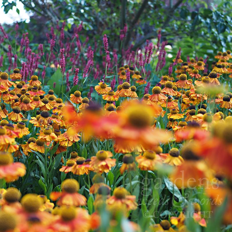 GWW-gardeninspo-day232.jpg