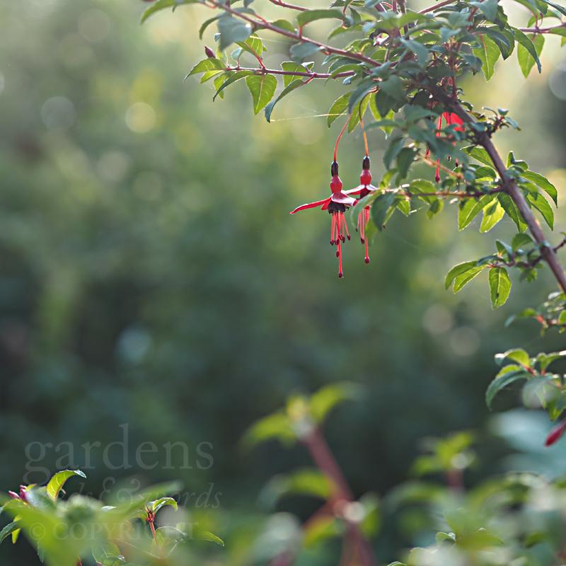 GWW-gardeninspo-day237.jpg