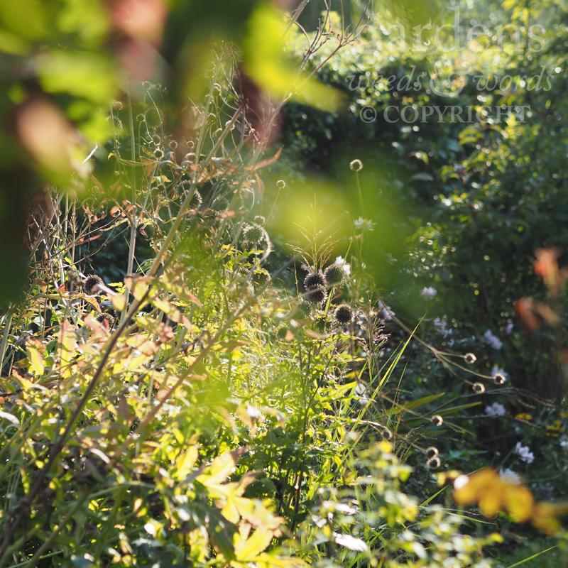 GWW-gardeninspo-day240.jpg
