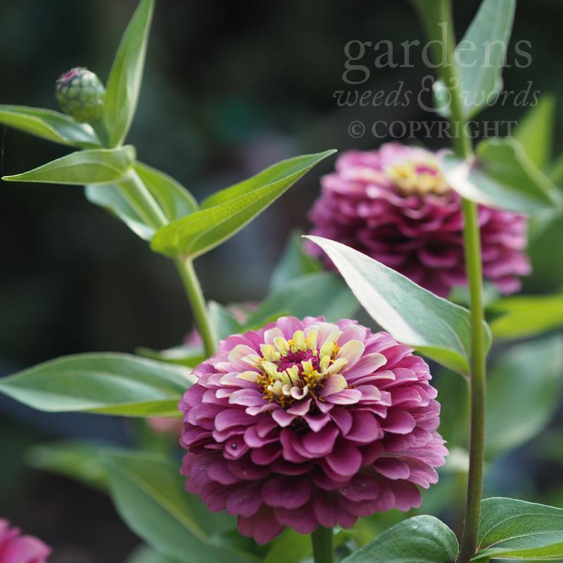 GWW-gardeninspo-day245.jpg