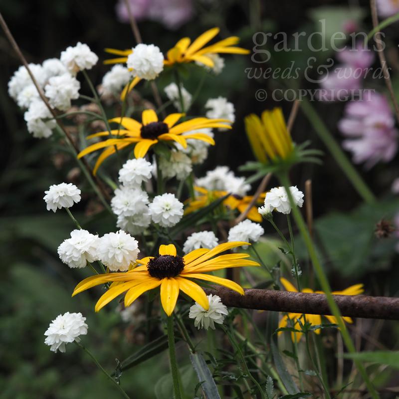 GWW-gardeninspo-day248.jpg