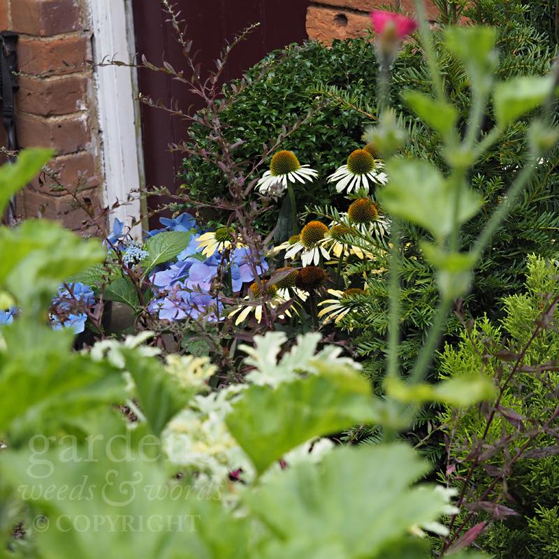 GWW-gardeninspo-day250.jpg