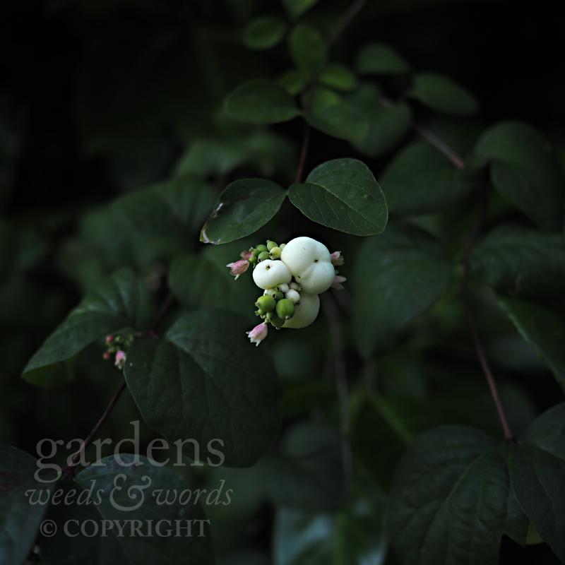 GWW-gardeninspo-day254.jpg