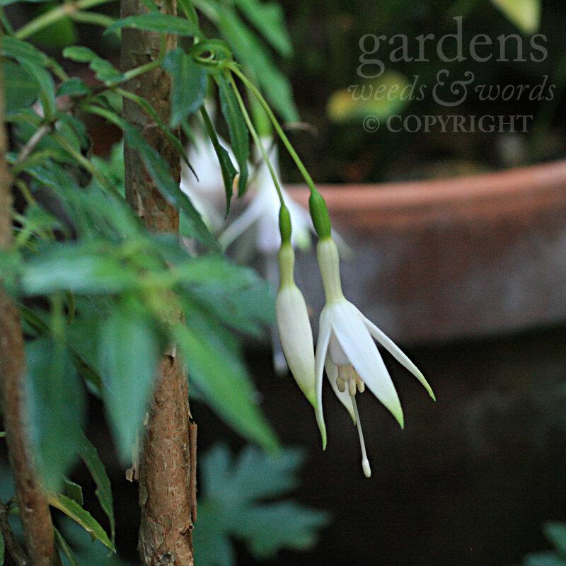 GWW-gardeninspo-day259.jpg