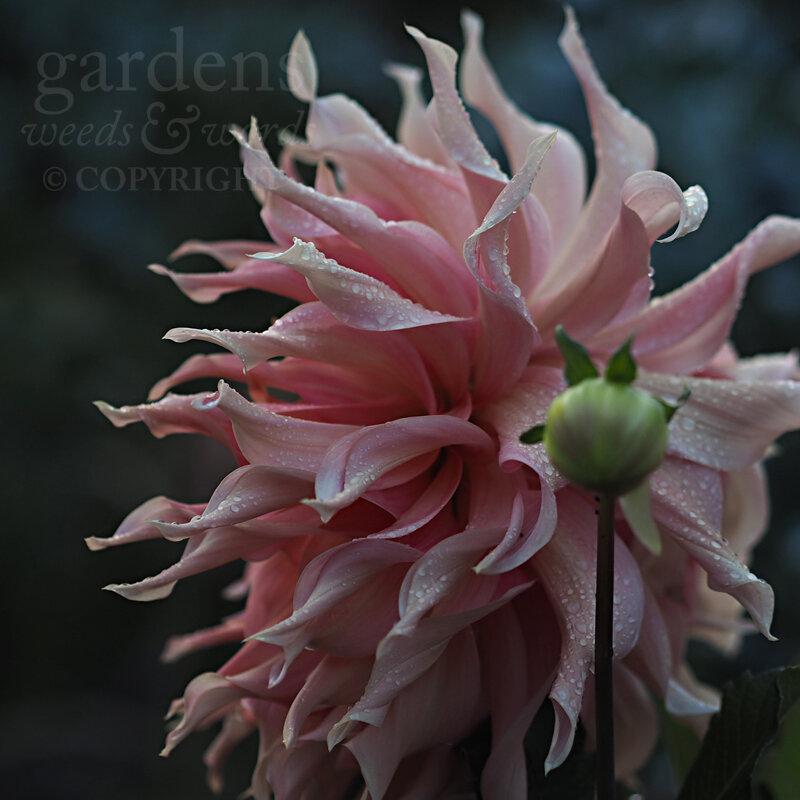 GWW-gardeninspo-day267.jpg
