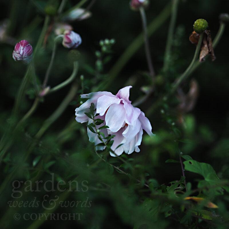 GWW-gardeninspo-day270.jpg