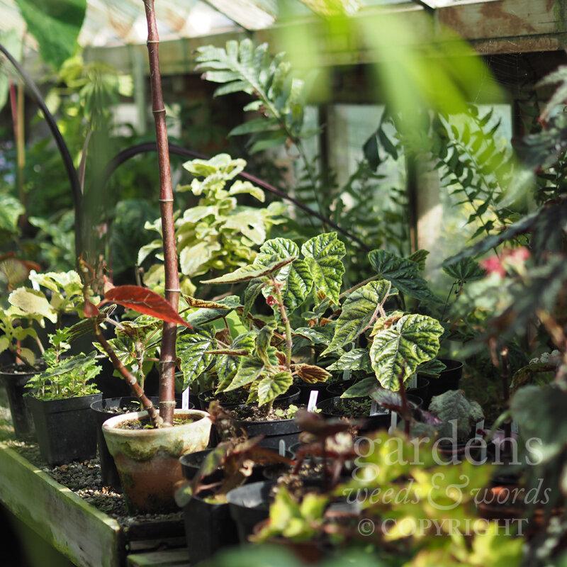 GWW-gardeninspo-day281.jpg