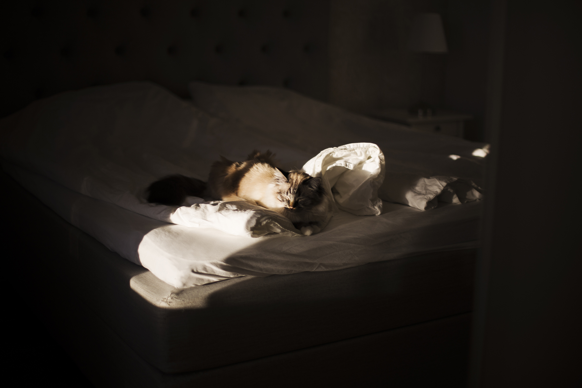 The soft sun light that shines through the window of my cat who is sleeping…