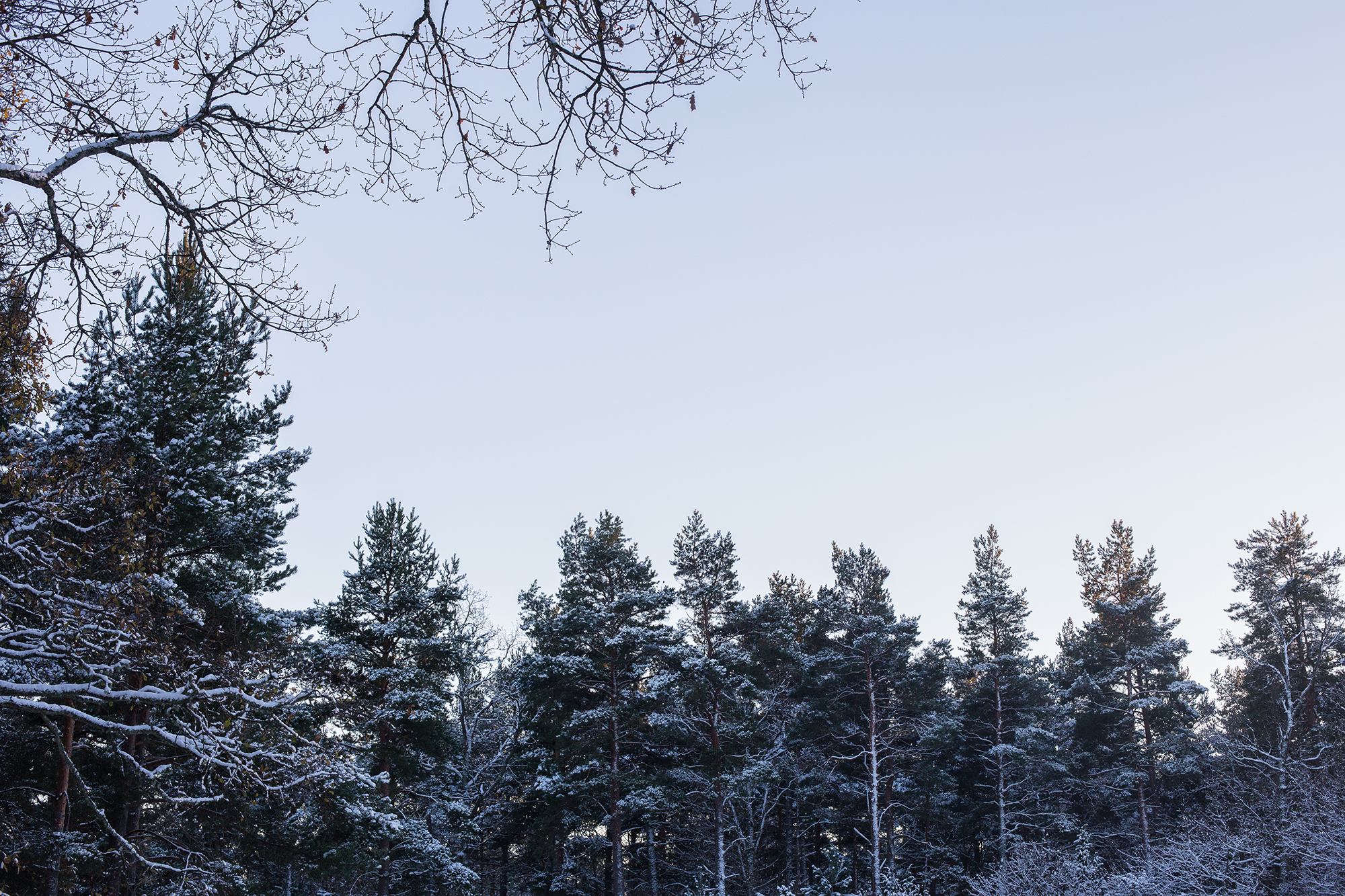 The beauty of of snow covered trees.