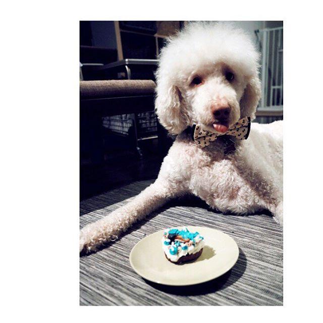 Birthday boy ❤️🎂🎉 #birthday #family #goldendoodle #bigdoglittledogbakery