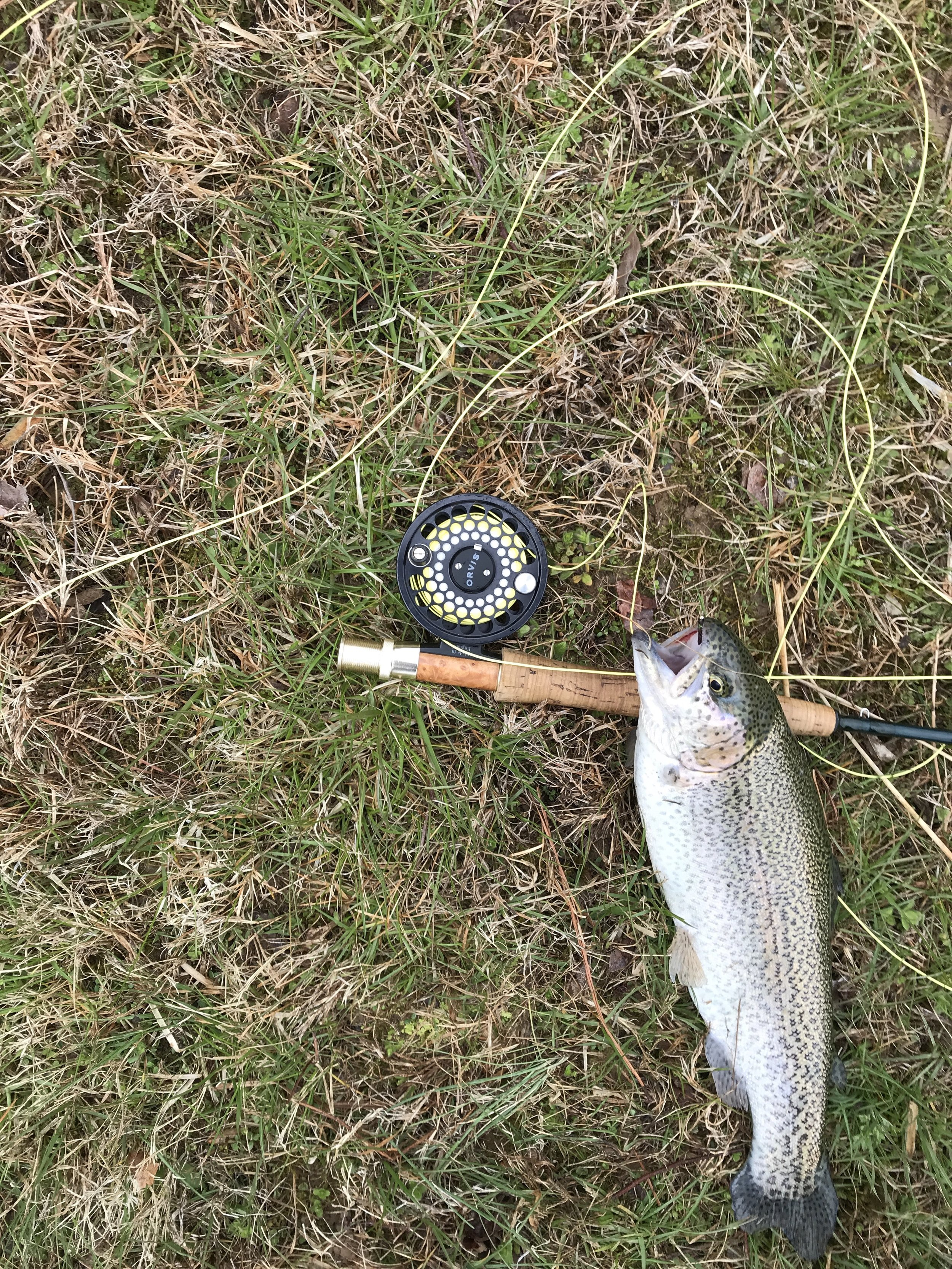 Trout pond update - At the club meeting on Saturday it was noted that the trout were not paying much attention to those coming to fish. Did that change in two days? Maybe. Andy Burdersky sent in the photo here and reported that he caught four trout on Monday, all on #16 nymphs.