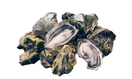 Kiwa-oyster-new-zealand