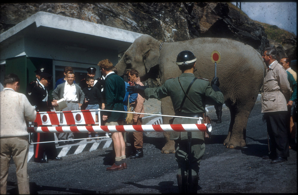 Crossing from France to Italy. Jumbo having her passport inspected.